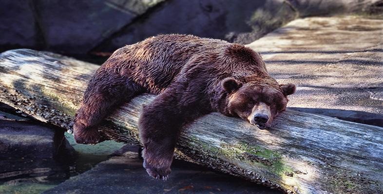 Meda spava